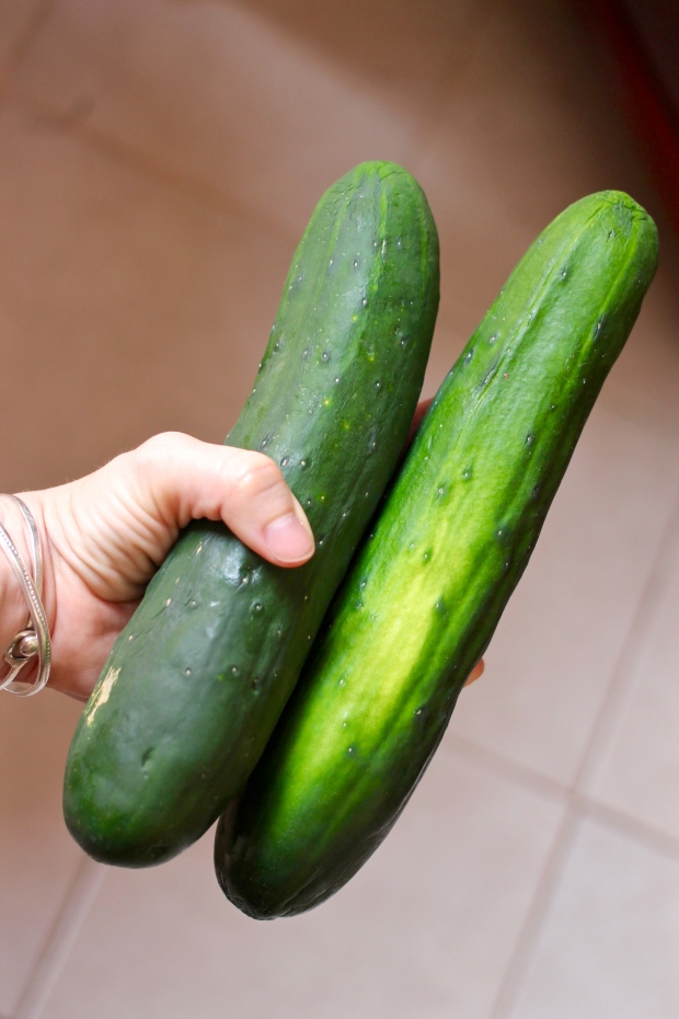 Cucumber Salad with Garlic-Dill Yogurt Sauce